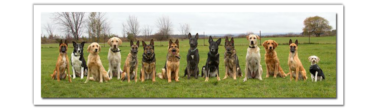 Image Elite Detection Dogs Our Team